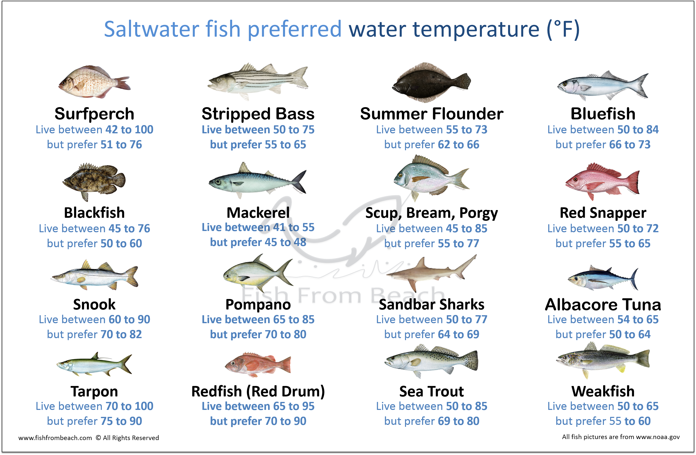 The Best Water Temperature For Surf Fishing – Fish From Beach